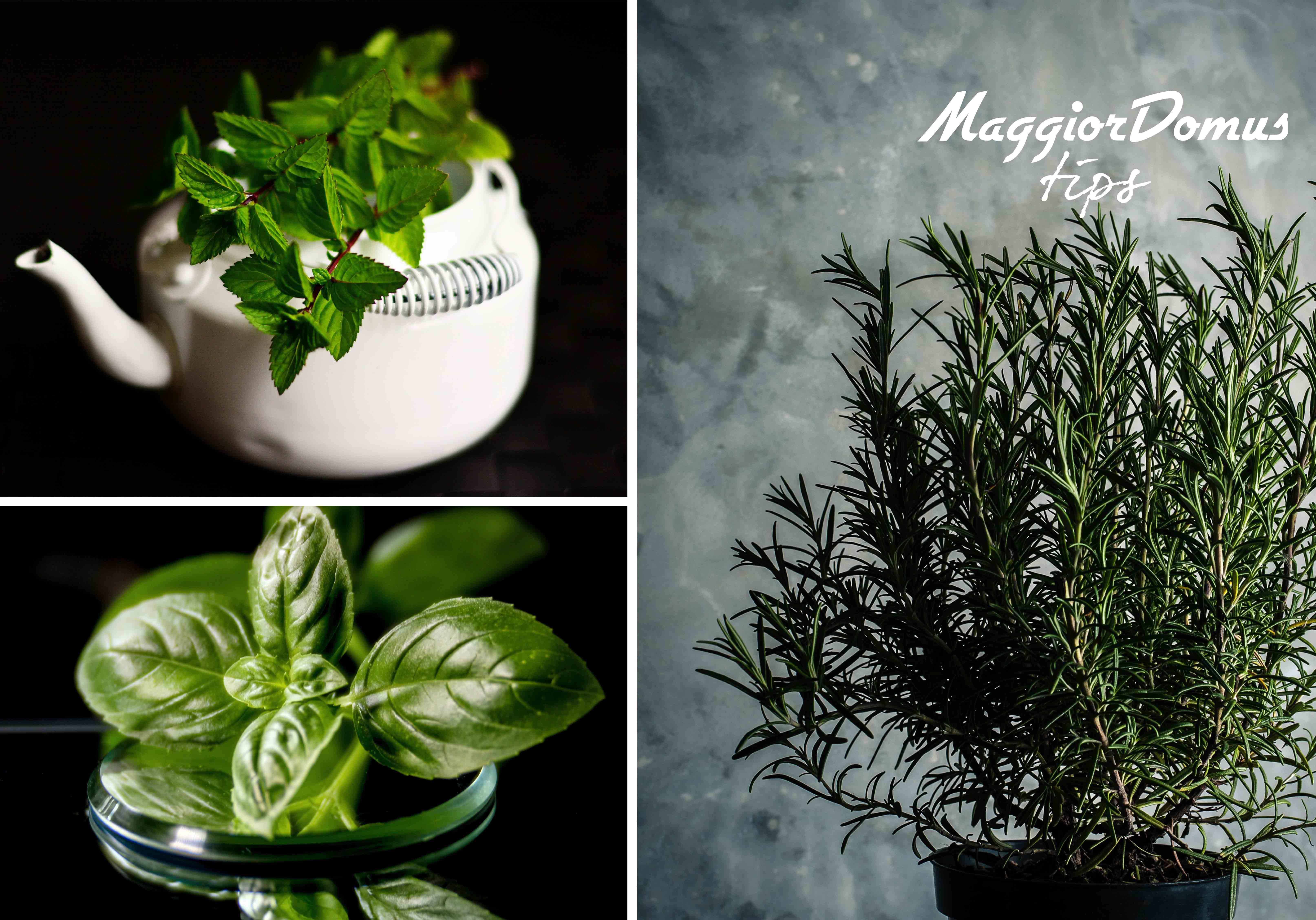 Coltivare In Casa Piante Aromatiche piante aromatiche: 10 erbe in vaso da piantare sul balcone a